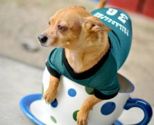 Natural Pawz Contest for the Dog Loving Football Fans