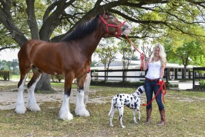 The Blonde Side & Budweiser Clydesdales (Photo: CatchLight Group)